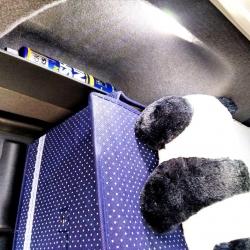لامپ یخی صندوق عقب اچ سی کراس